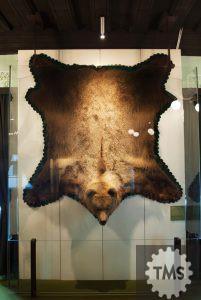 Medved svetovni prvak