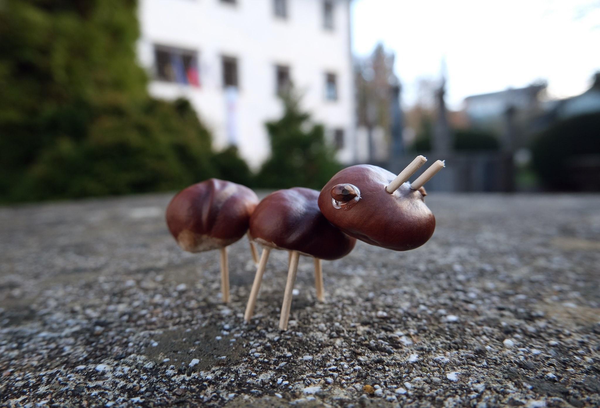 mravljica